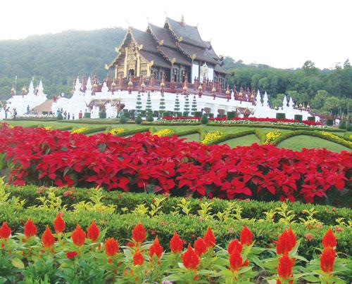 Du Lịch Thái Lan – Chiang Mai – Một Địa Điểm Nổi Tiếng tại đất nước Chùa Tháp Vàng