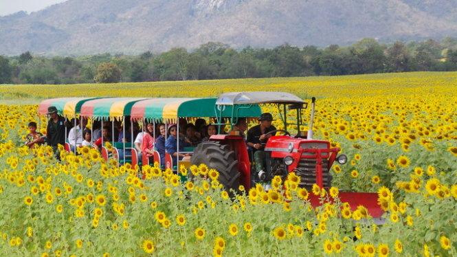 Khám phá vùng đất hoa mặt trời ở Đất nước Thái Lan