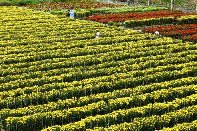 Ngắm làng hoa đẹp và lớn nhất khu vực Miền Tây Nam Bộ
