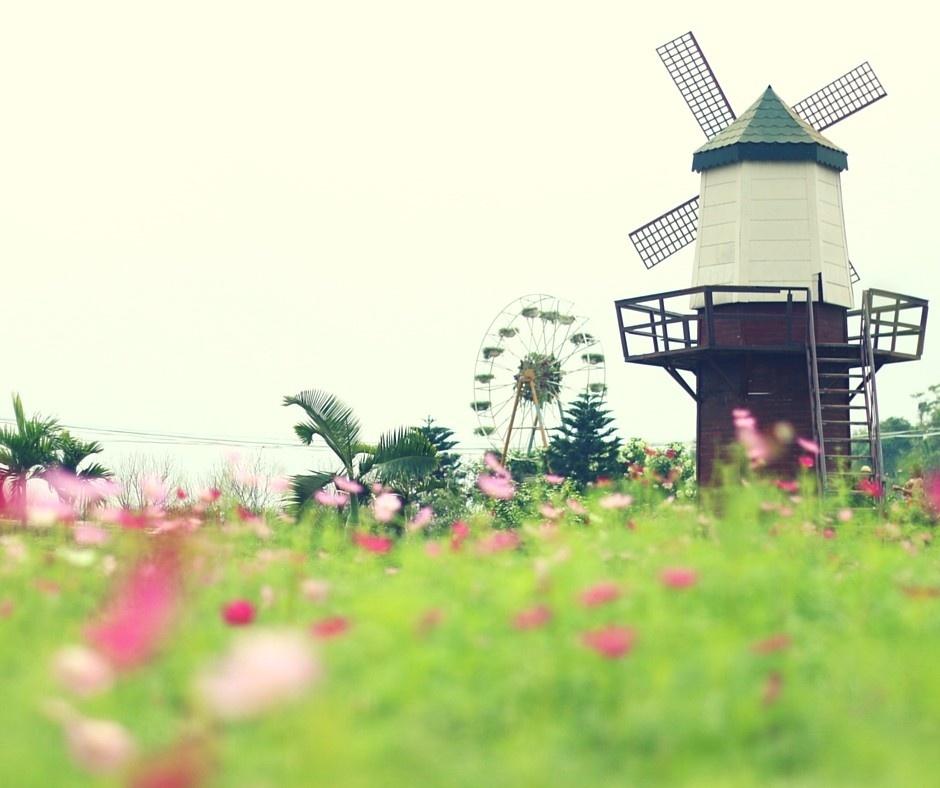 Ngắm cảnh mùa xuân trên những con phố Hà Nội