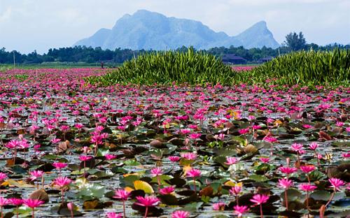 Bạn cần gì cho chuyến đi khám phá đất nước chùa Vàng Thái Lan