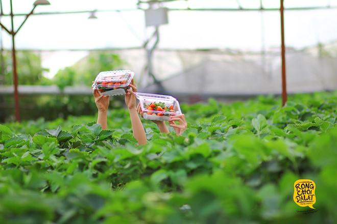 Du lịch nhà vườn tại Đà Lạt