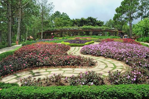 Có thể bạn chưa biết về đồi Mộng Mơ ở Đà lạt
