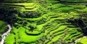 Khám phá ruộng lúa bậc thang ở Philippines