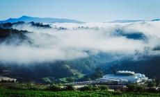 Đến Đà Lạt, tận hưởng không gian yên bình ở đồi chè Cầu Đất