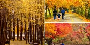 Đến Hàn Quốc, nên thử ngay những trải nghiệm này