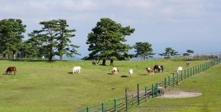 Khám phá thiên đường biển đảo Jeju