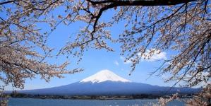 3 điểm đến lý tưởng ở châu Á ngắm cảnh hoa anh đào