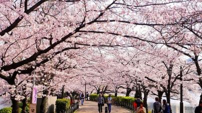 Du lịch Hàn Quốc tháng mấy để có tầm nhìn đẹp