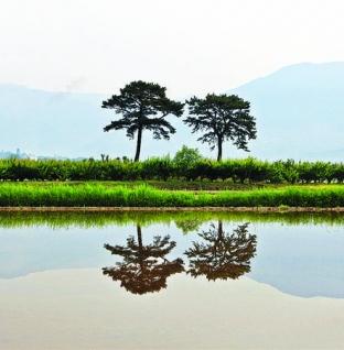 Vẻ đẹp ấn tượng ở dãy Alps ở đất nước lãng mạn Hàn Quốc