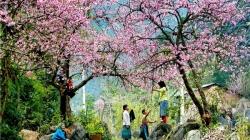 Say đắm với 4 mùa hoa tuyệt đẹp ở Mộc Châu