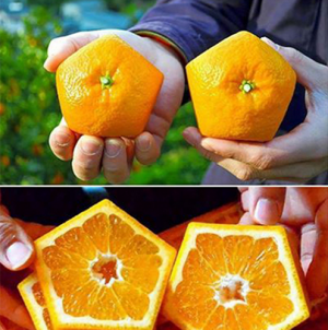 Những loại trái cây độc, lạ có giá trên trời ở Nhật