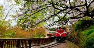 Tổng hợp những địa điểm ngắm hoa anh đào ở Đài Loan