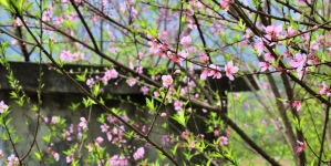 Mộc Châu đẹp có gì trong suốt 1 năm (Phần 2)