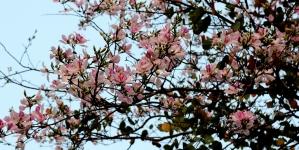 Mộc Châu đẹp có gì trong suốt 1 năm (Phần 1)