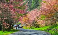Những lễ hội hoa tuyệt đẹp ở Đài Loan