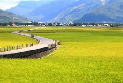 Ngỡ ngàng trước con đường lúa vàng tại Đài Loan