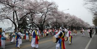 Nếu bạn muốn ngắm hoa anh đào tuyệt đẹp ở Hàn Quốc, hãy tới 2 địa điểm này