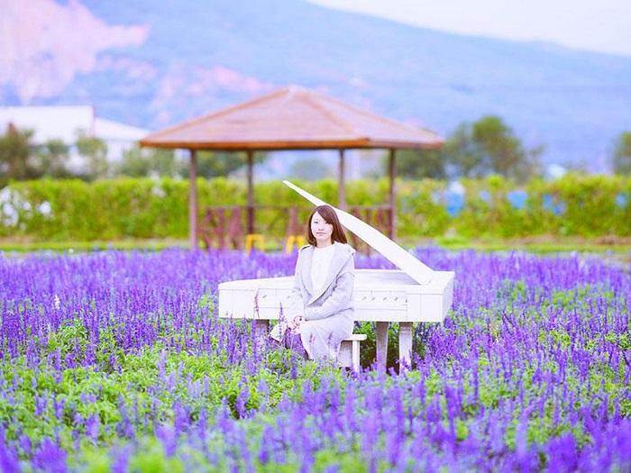 Cánh đồng hoa oải hương tuyệt đẹp nên tới Đài Trung