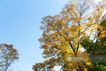 Mùa thu đến, nhất định đến Hàn Quốc 1 lần trong đời