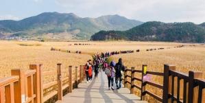 Khám phá cánh đồng lau sậy lớn nhất ở Hàn Quốc
