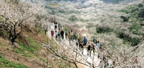 Tháng 3 ở Hàn Quốc có gì hấp dẫn?