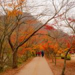 Lý do mọi người tới Hàn Quốc vào mùa thu
