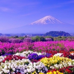 Các lý do đến Nhật Bản vào ngày hè