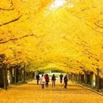 Đến Gangwon – Điểm du lịch lý tưởng ở Hàn Quốc