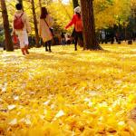 Đảo Nami – Điểm dừng chân lý tưởng khi mùa thu đến