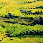 Điểm danh những điểm ngắm ruộng bậc thang mùa lúa chín tuyệt đẹp ở Việt Nam