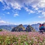 Tháng 10, kéo nhau lên Hà Giang ngắm tam giác mạch