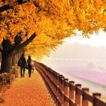 Lạc lối trong thiên đường lá đỏ của Hàn Quốc khi mùa thu sang