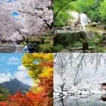"""4 lý do làm bạn """"cuồng chân"""" muốn đi Hàn Quốc ngay vào mùa xuân"""