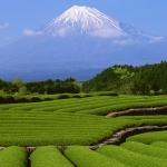 Thời điểm lý tưởng để đi Nhật Bản khám phá và trải nghiệm