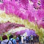 Những điểm đến giống thiên đường ở Nhật Bản