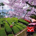Mua quà gì khi đi du lịch Đài Loan?