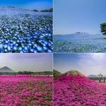 Kinh nghiệm đi du lịch Nhật Bản trọn vẹn mà tiết kiệm