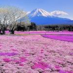 Phát sốt với sắc hoa mùa hè ở Nhật Bản