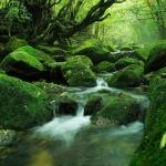 5 hòn đảo tuyệt đẹp ở Nhật Bản bạn nên đến khi có cơ hội