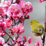Đến Nhật Bản ngay, ngắm sắc hoa rực rỡ