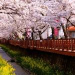Đến Hàn Quốc vào mùa hè, chơi ở đâu ăn gì ngon?