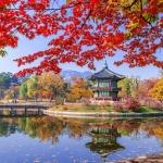 Những điểm chụp ảnh khi Hàn Quốc vào thu đẹp xuất sắc