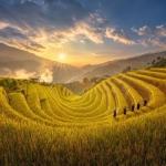 Ngây ngất trước khung cảnh mùa lúa chín ở Yên Bái, Sapa, Hà Giang