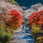 Đến Nhật Bản mùa thu này, tham gia những lễ hội đặc sắc