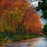 Địa điểm ngắm lá phong tuyệt đẹp khi Đài Loan vào thu
