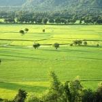 Đến An Giang ngắm nhìn cánh đồng lúa Tà Pạ