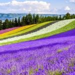 Điểm đến ngắm hoa xuân đẹp nhất ở Hokkaido